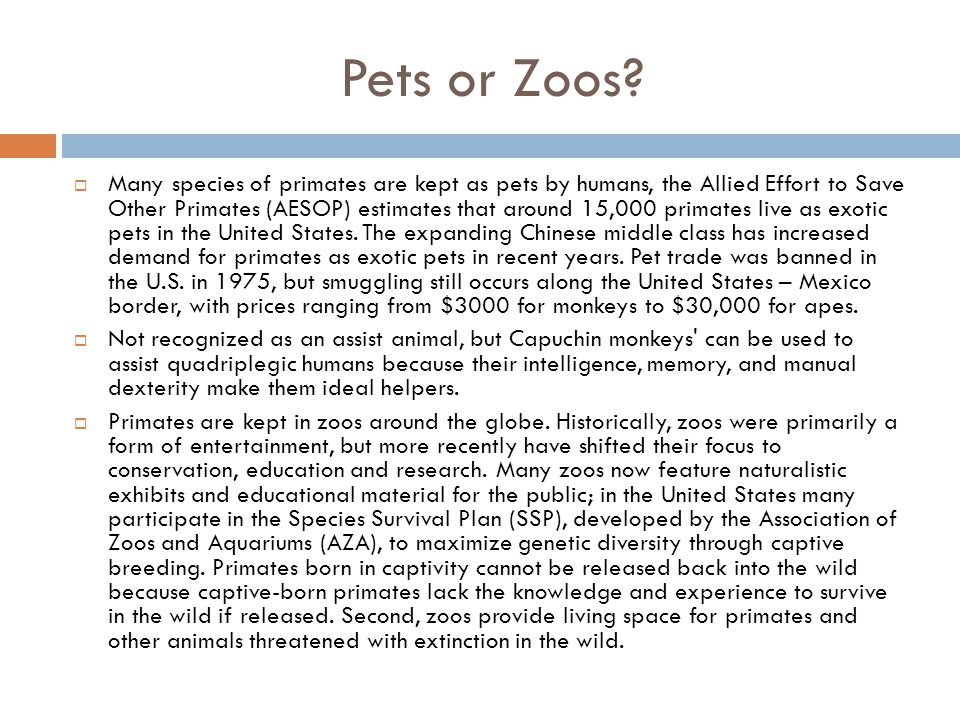 Pets or Zoos