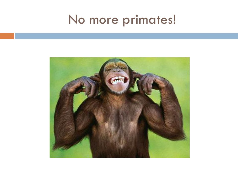 No more primates!