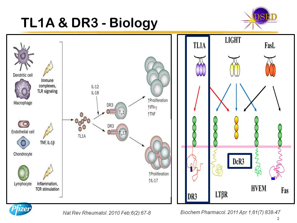 TL1A & DR3 - Biology TL1A (aka TNFSF15) is a recently identified member of TNF superfamily.