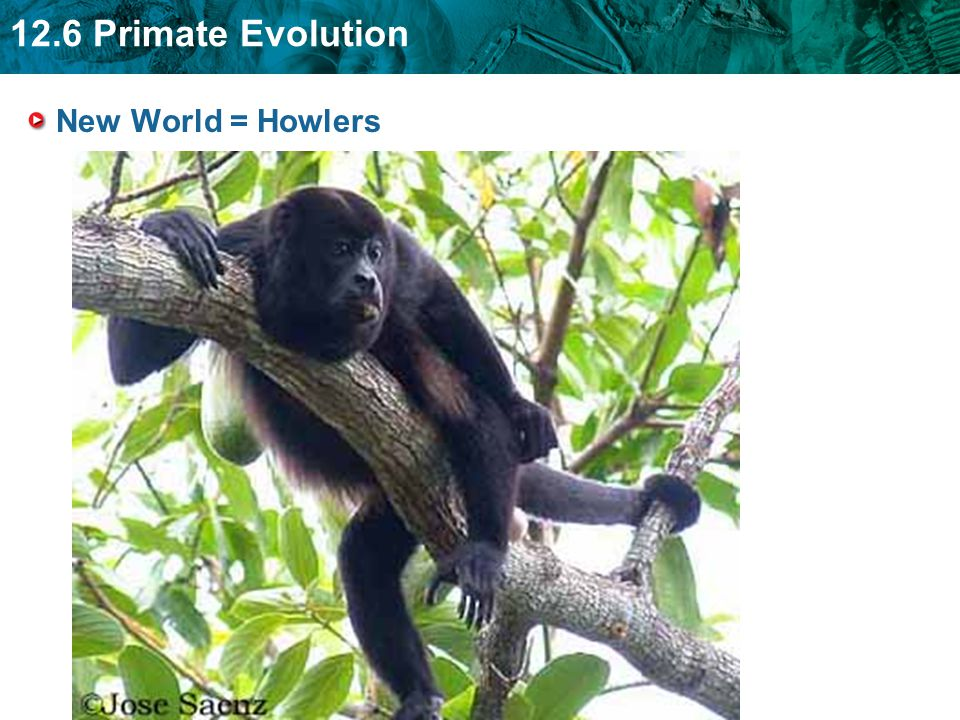 New World = Howlers