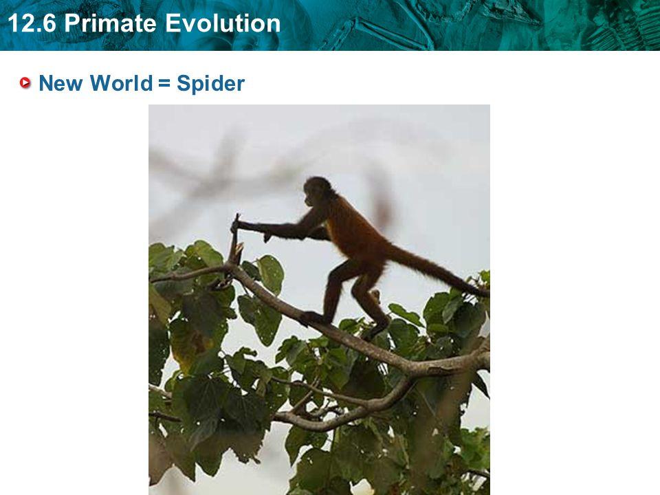 New World = Spider