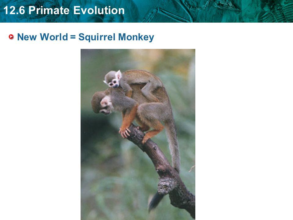 New World = Squirrel Monkey