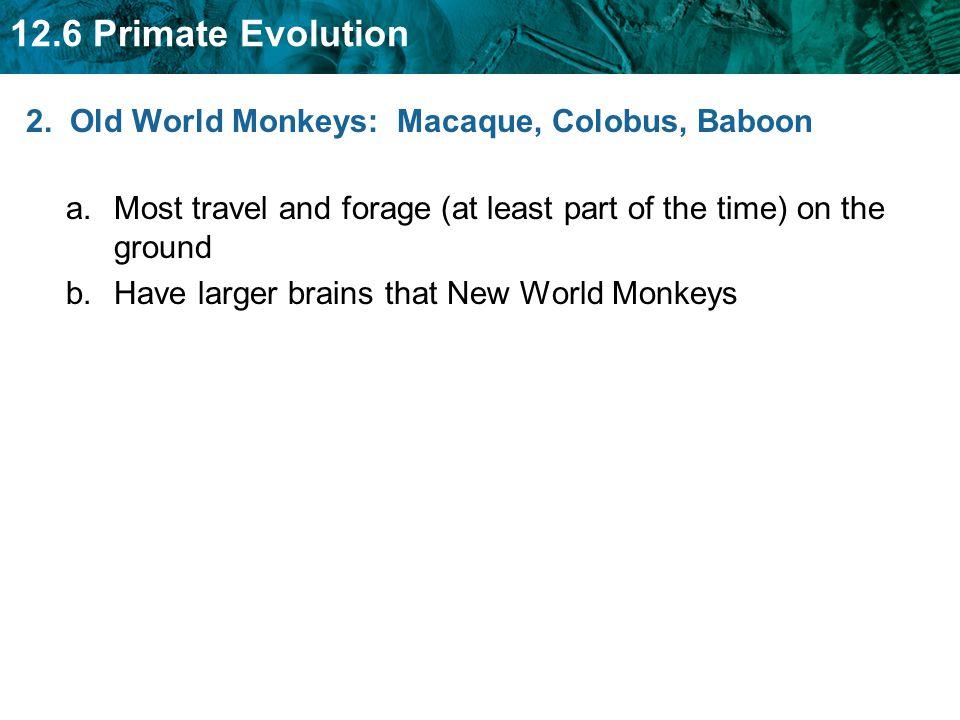 2. Old World Monkeys: Macaque, Colobus, Baboon