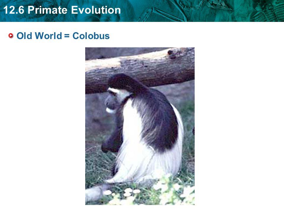 Old World = Colobus