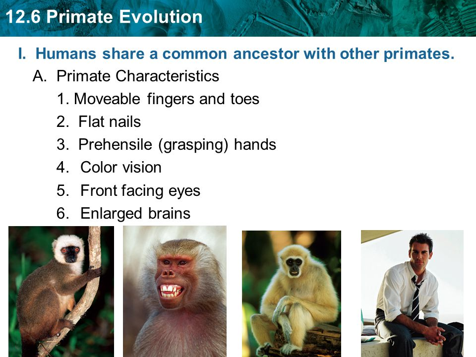 I. Humans share a common ancestor with other primates.