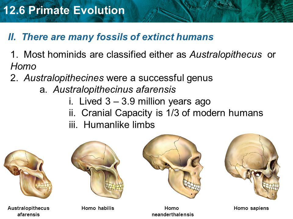 II. There are many fossils of extinct humans