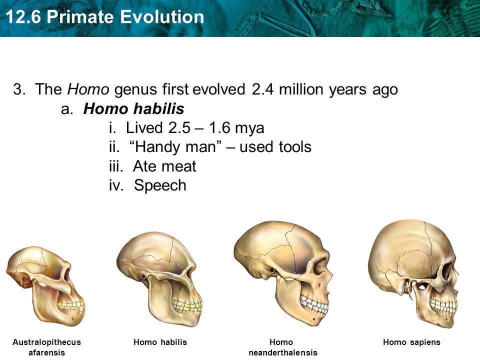 3. The Homo genus first evolved 2.4 million years ago a. Homo habilis i. Lived 2.5 – 1.6 mya ii. Handy man – used tools iii. Ate meat iv. Speech