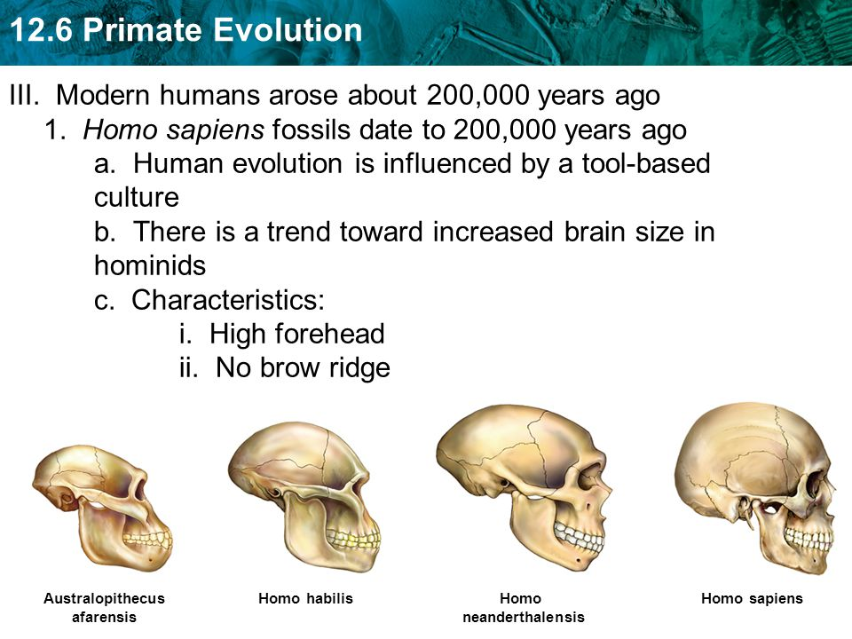 III. Modern humans arose about 200,000 years ago 1
