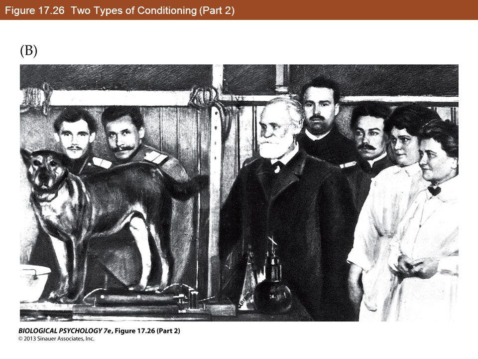 Figure 17.26 Two Types of Conditioning (Part 2)