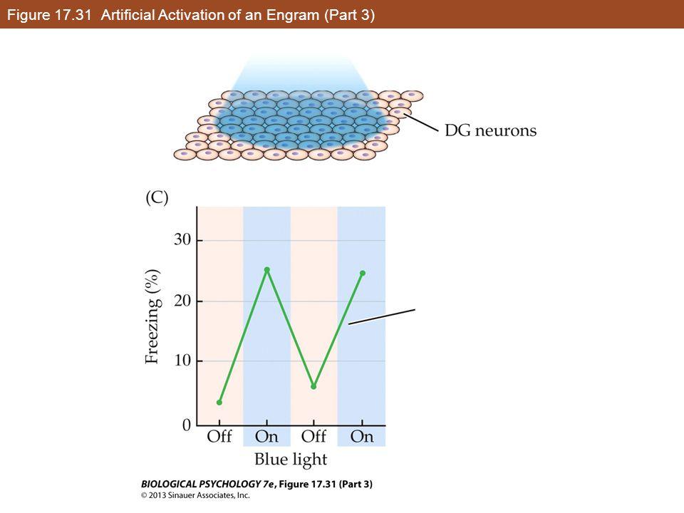 Figure 17.31 Artificial Activation of an Engram (Part 3)