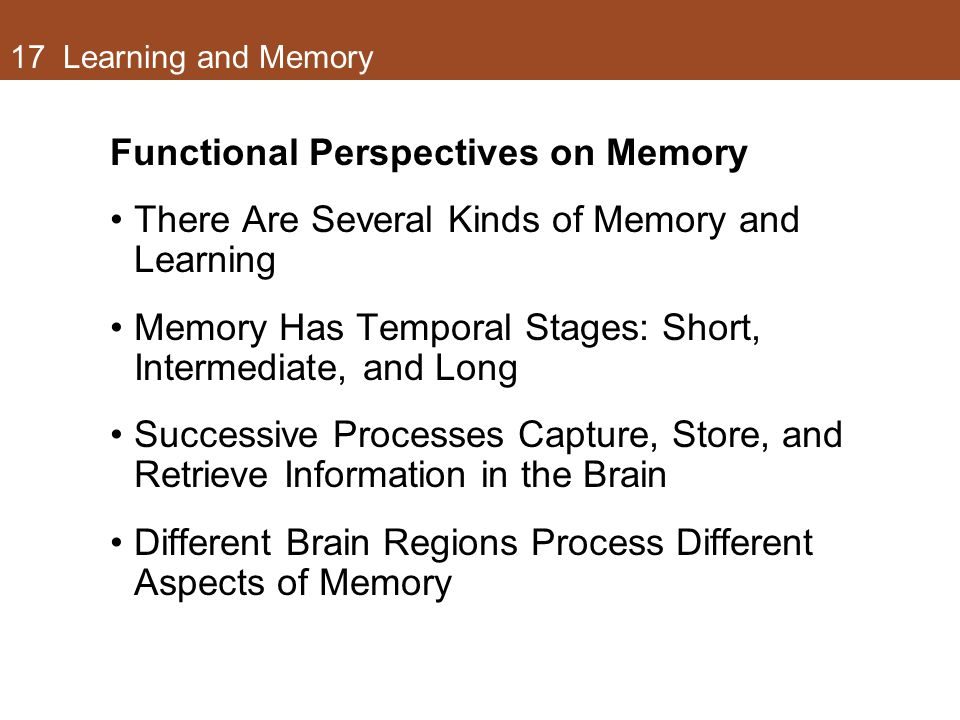 Functional Perspectives on Memory