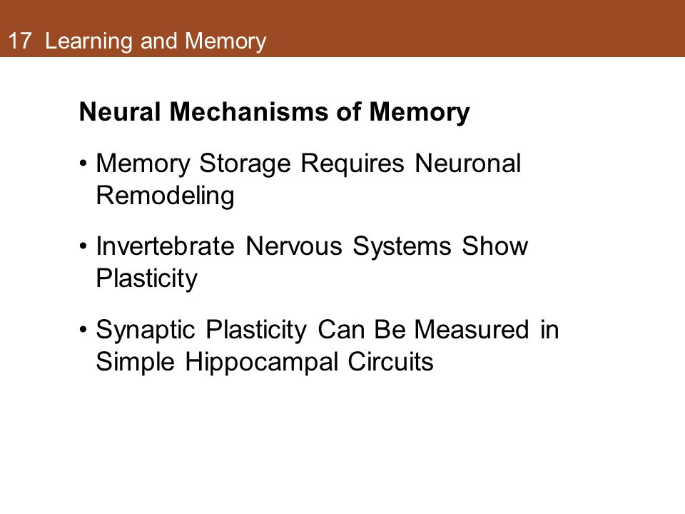Neural Mechanisms of Memory