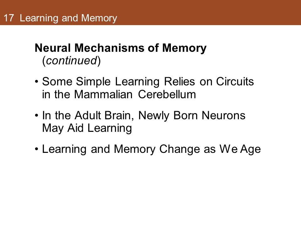 Neural Mechanisms of Memory (continued)