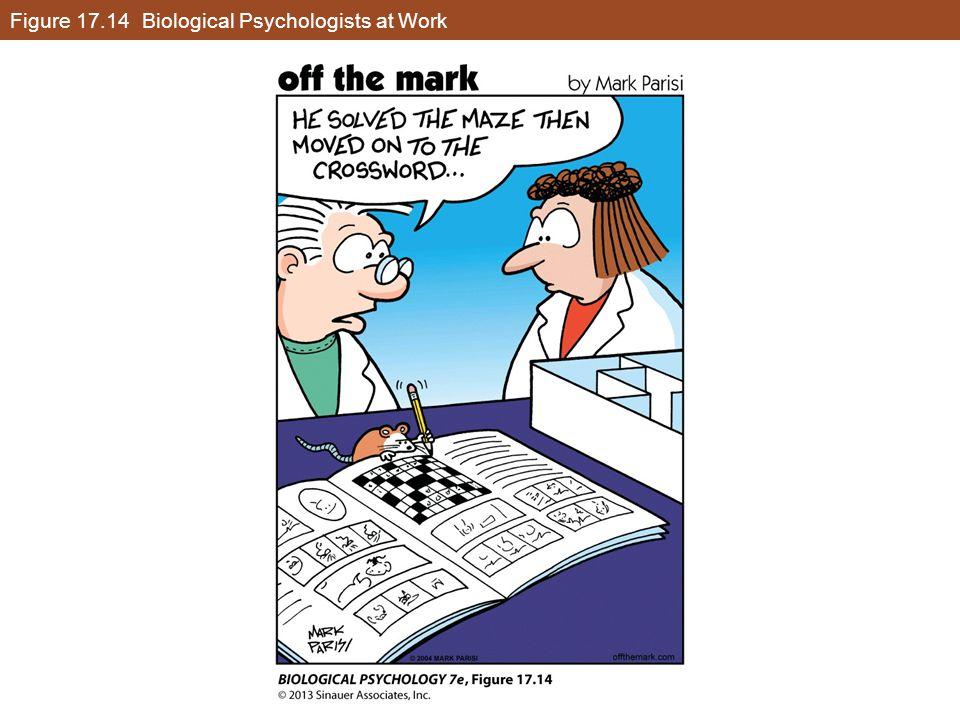 Figure 17.14 Biological Psychologists at Work