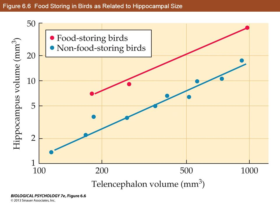 Figure 6.6 Food Storing in Birds as Related to Hippocampal Size