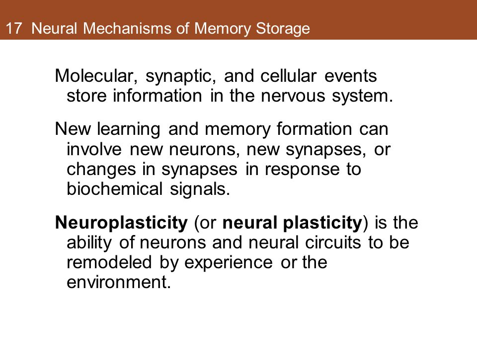 17 Neural Mechanisms of Memory Storage