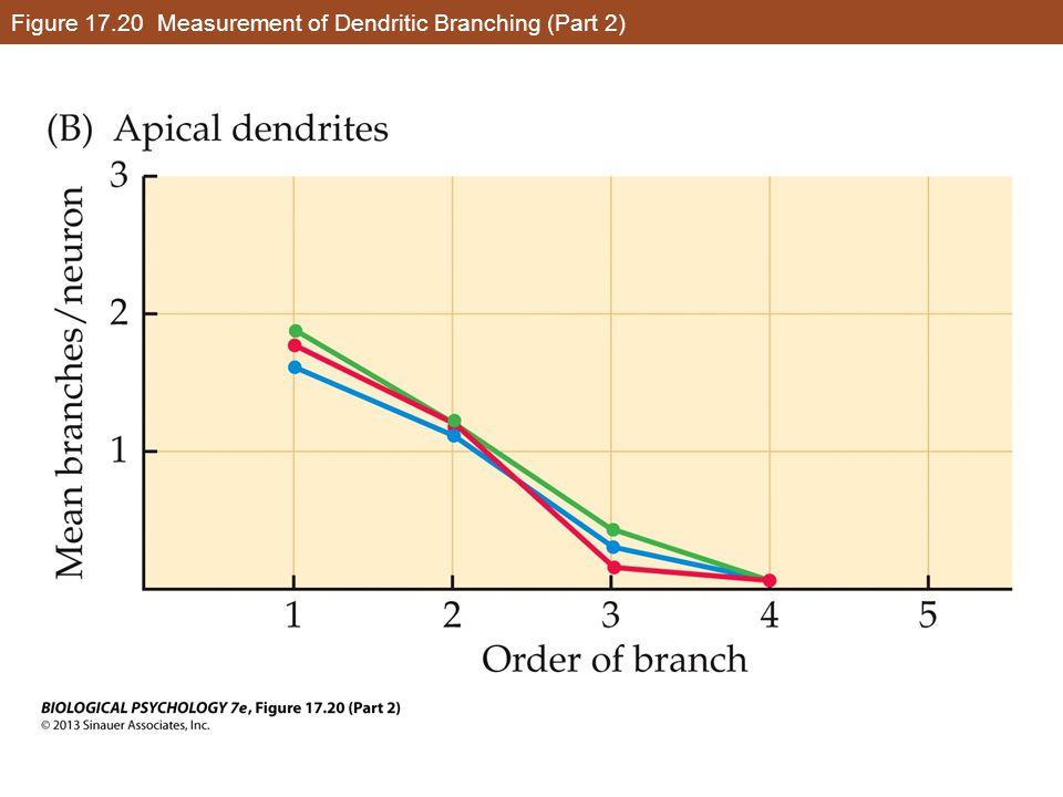 Figure 17.20 Measurement of Dendritic Branching (Part 2)