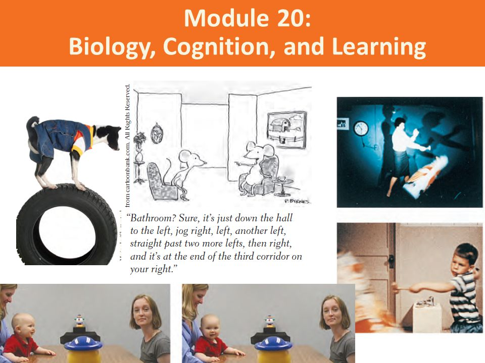 Module 20: Biology, Cognition, and Learning