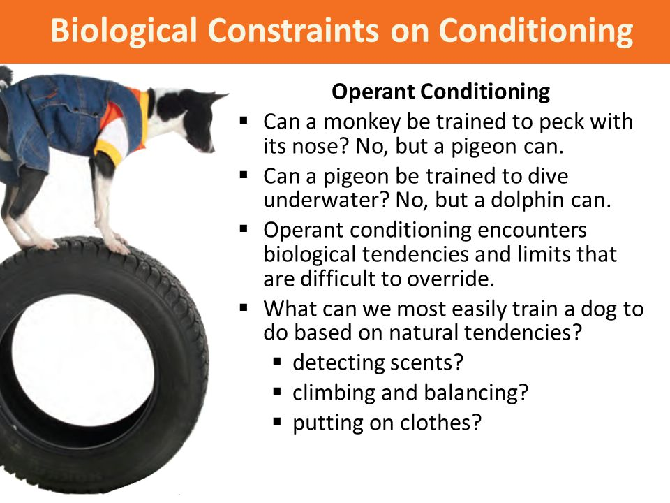 Biological Constraints on Conditioning