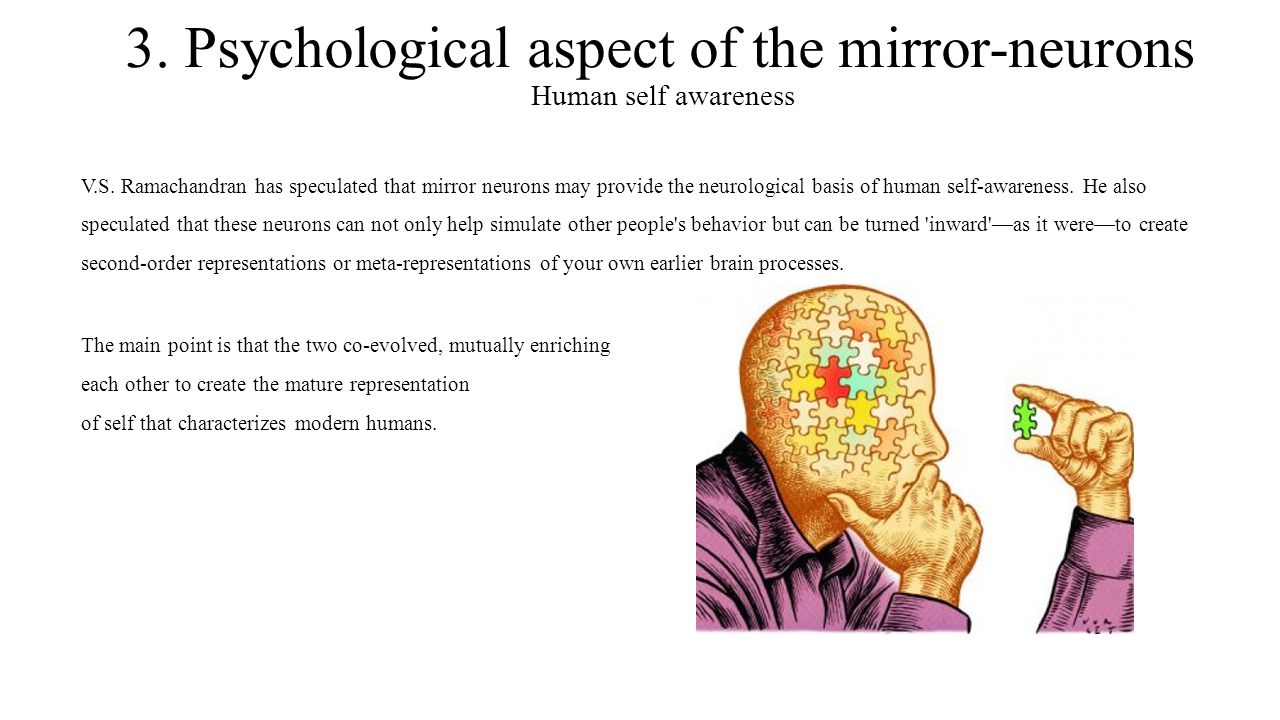 3. Psychological aspect of the mirror-neurons Human self awareness