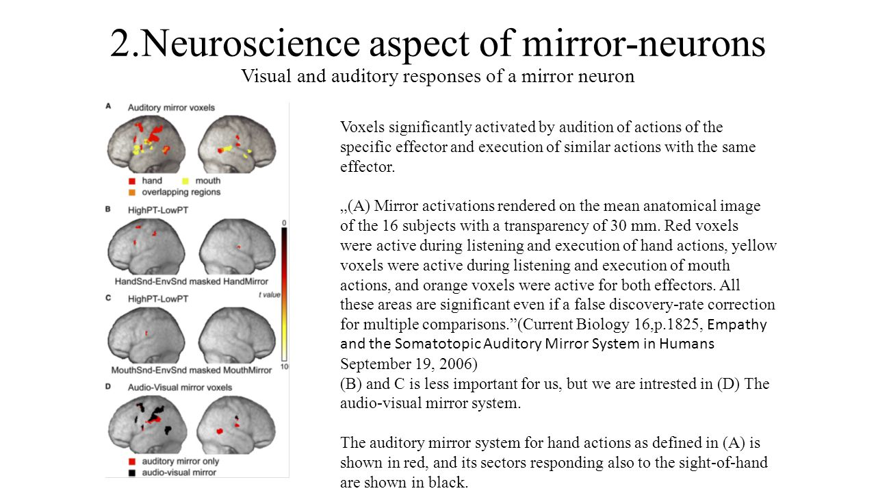 2.Neuroscience aspect of mirror-neurons Visual and auditory responses of a mirror neuron