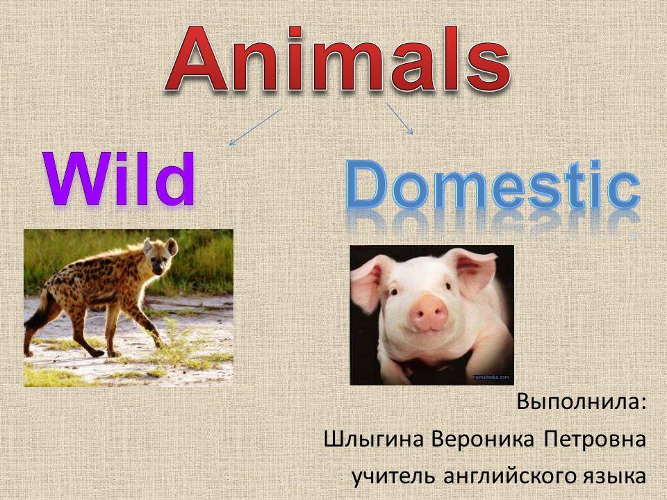 Animals Wild Domestic Выполнила: Шлыгина Вероника Петровна