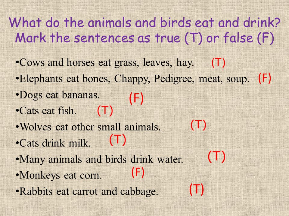 What do the animals and birds eat and drink