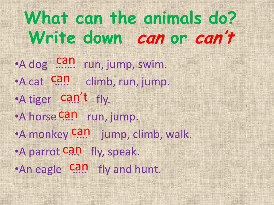 What can the animals do Write down can or can't