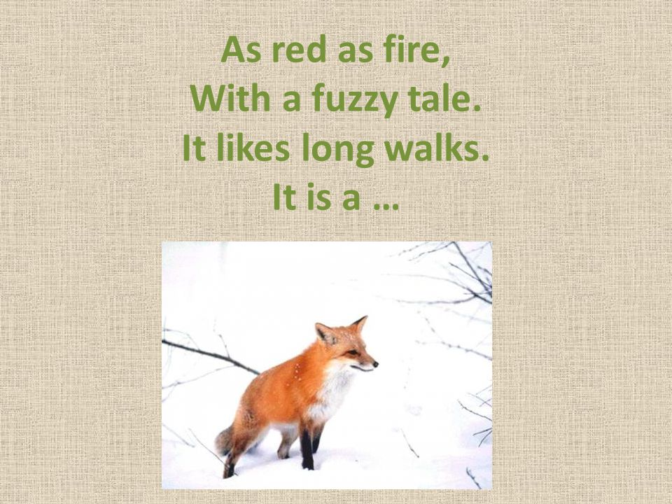 As red as fire, With a fuzzy tale. It likes long walks. It is a …