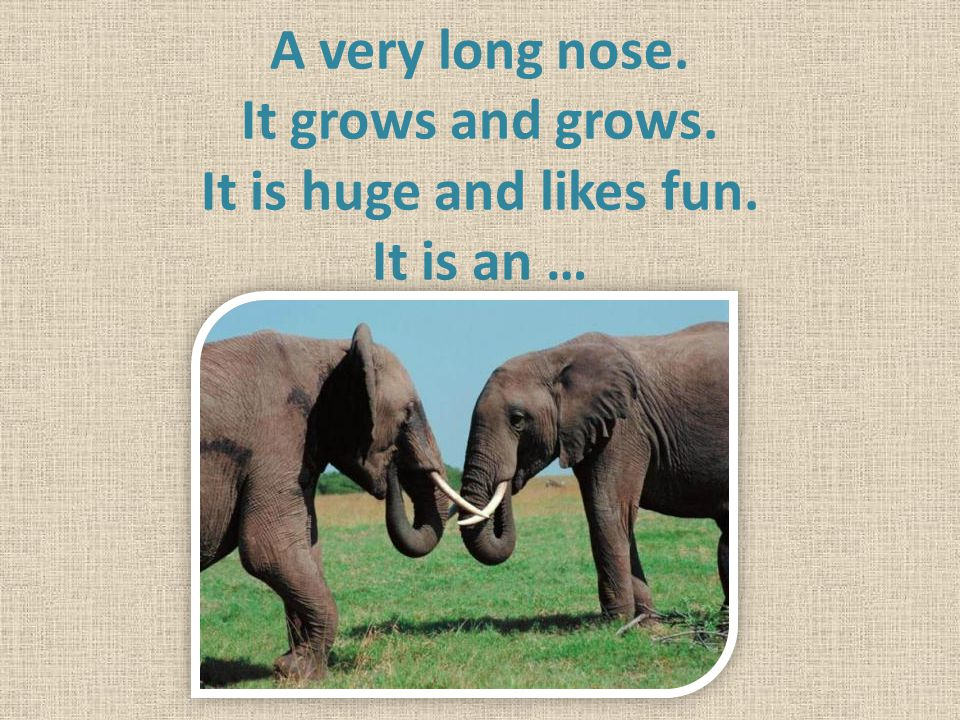 A very long nose. It grows and grows. It is huge and likes fun