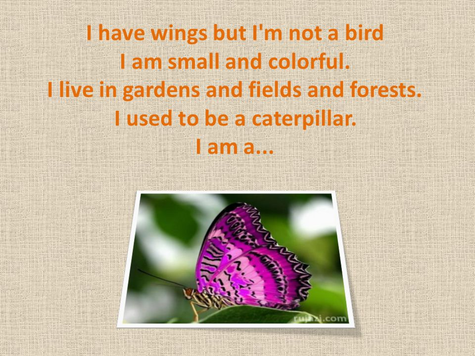 I have wings but I m not a bird I am small and colorful