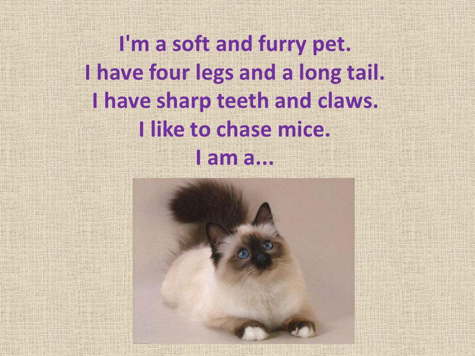 I m a soft and furry pet. I have four legs and a long tail