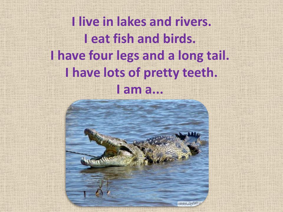 I live in lakes and rivers. I eat fish and birds
