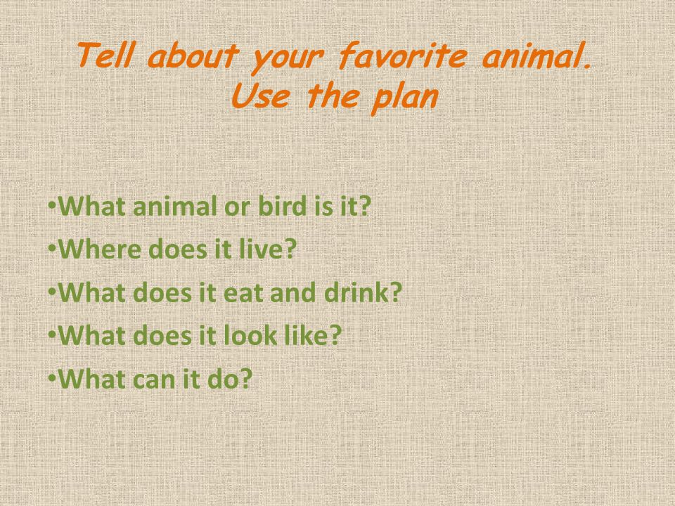 Tell about your favorite animal. Use the plan