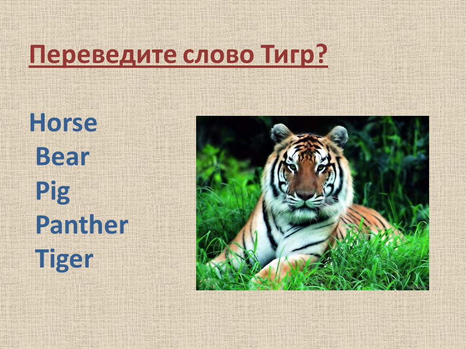Переведите слово Тигр Horse Bear Pig Panther Tiger