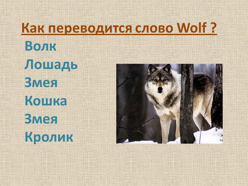 Как переводится слово Wolf Волк Лошадь Змея Кошка Змея Кролик
