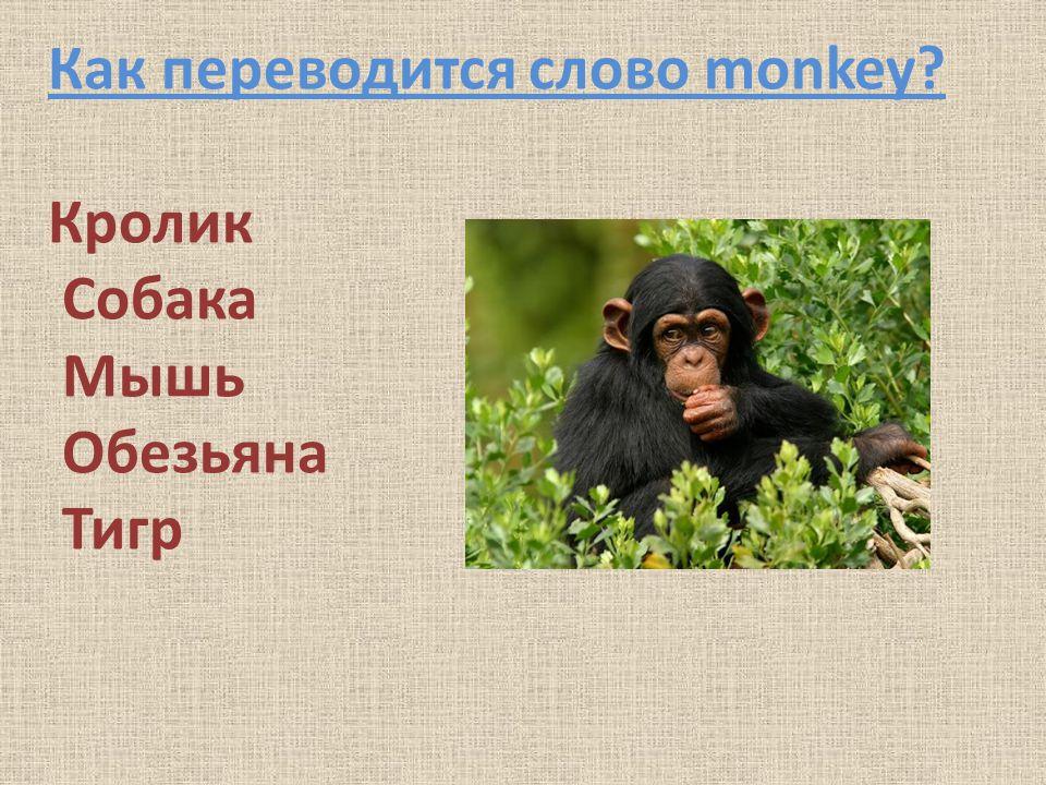 Как переводится слово monkey Кролик Собака Мышь Обезьяна Тигр