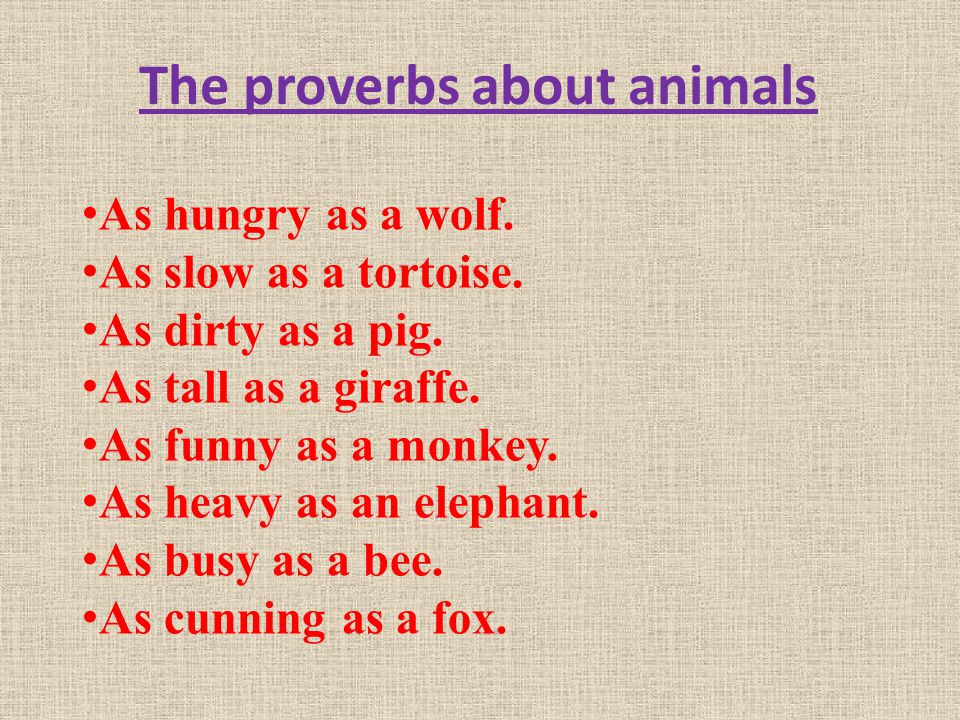 The proverbs about animals