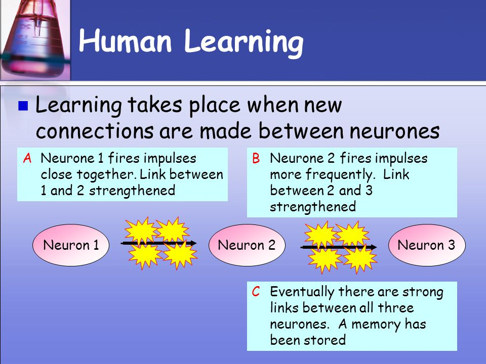 Human Learning Learning takes place when new connections are made between neurones.