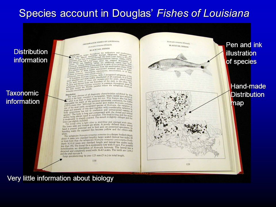 Species account in Douglas' Fishes of Louisiana