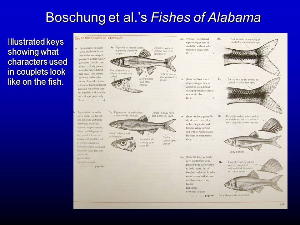 Boschung et al.'s Fishes of Alabama