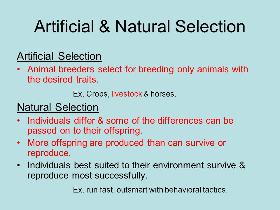 Artificial & Natural Selection