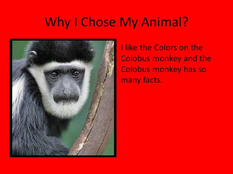 Why I Chose My Animal.