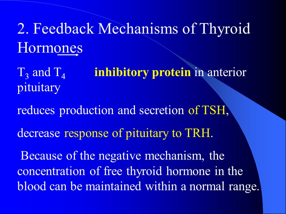 2. Feedback Mechanisms of Thyroid Hormones