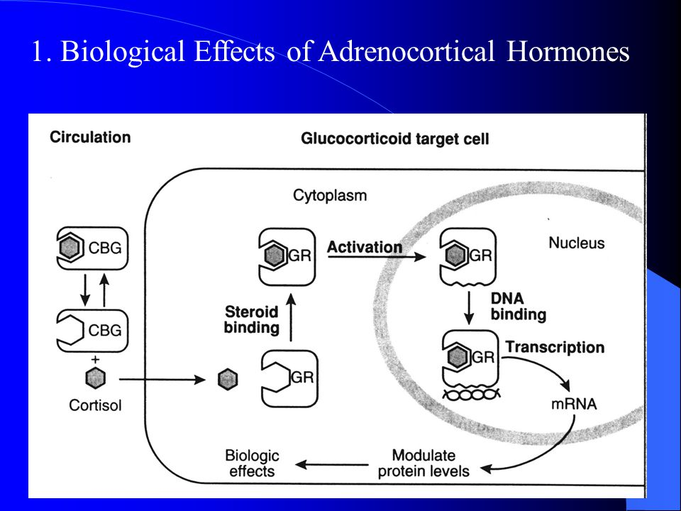1. Biological Effects of Adrenocortical Hormones