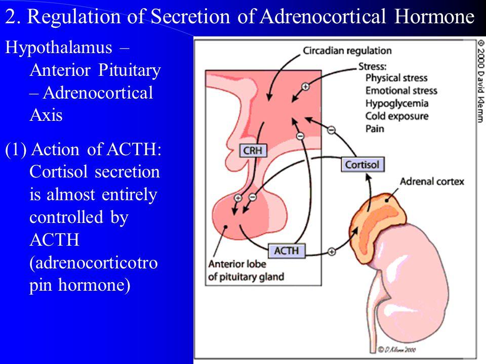 2. Regulation of Secretion of Adrenocortical Hormone