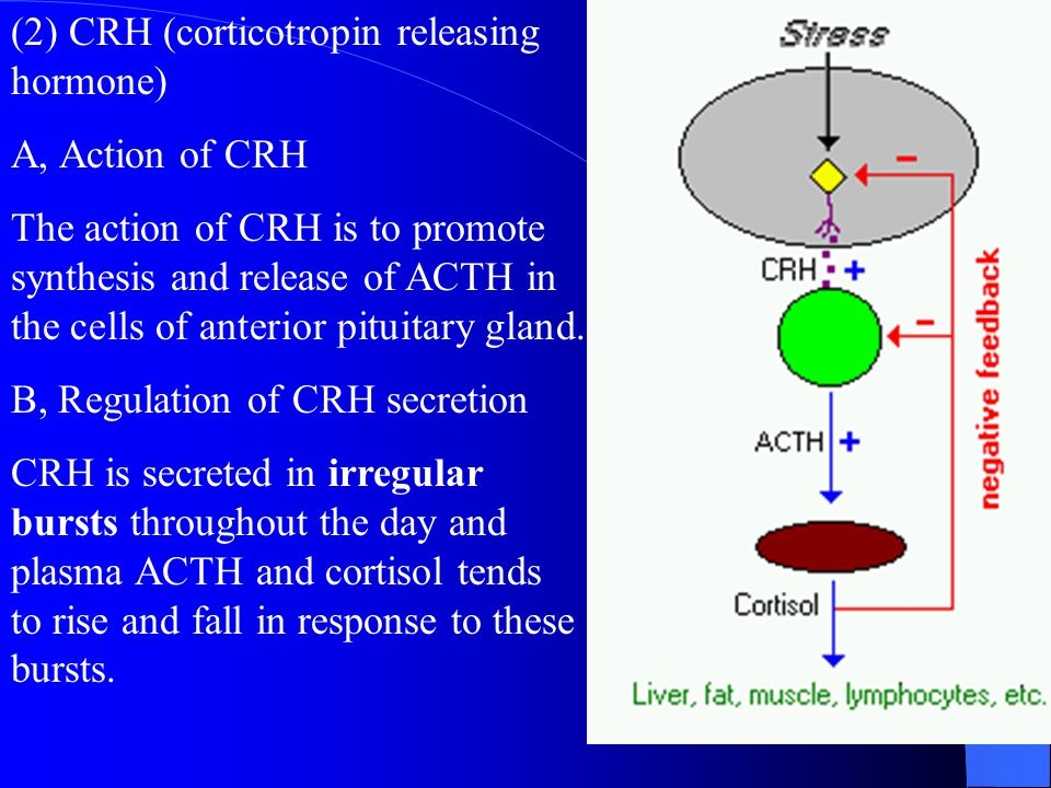 (2) CRH (corticotropin releasing hormone)