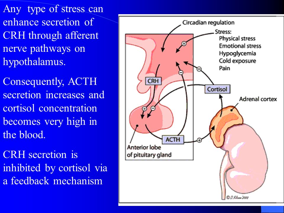 Any type of stress can enhance secretion of CRH through afferent nerve pathways on hypothalamus.