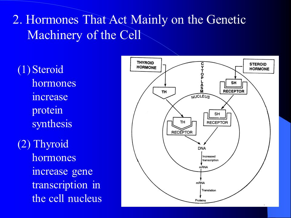 2. Hormones That Act Mainly on the Genetic Machinery of the Cell