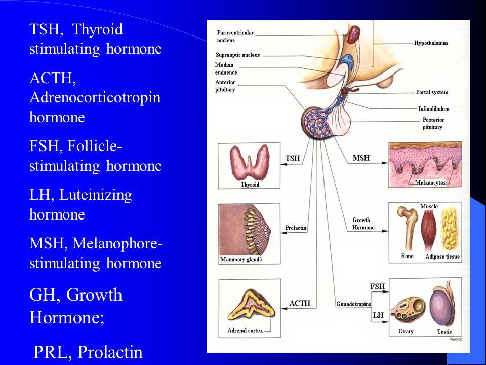GH, Growth Hormone; PRL, Prolactin TSH, Thyroid stimulating hormone
